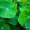 Emerald by Barbara Schultheis