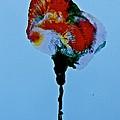 Emerging Flower by Gloria Warren