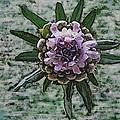 Emerging Pincushin by Debbie Portwood