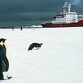 Emperor Penguins On Sea-ice, Antarctica by Doug Allan