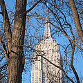 Empire State Building by Stefa Charczenko