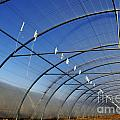 Empty Greenhouse In Winter by Sami Sarkis