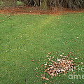Empty Lawn With A Little Heap Of Leaves Scraped Together by Matthias Hauser