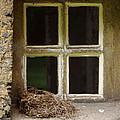 Empty Nest by Paul Slebodnick