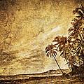 Empty Tropical Beach 3 by Skip Nall