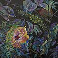 Enchanted by Carole Haslock