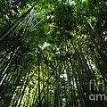 Enchanted Forest Haleakala National Park by Vivian Christopher