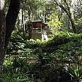 Enchanted Forrest II by Cheryl Matthew