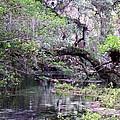 Enchanted Forrest Iv by Cheryl Matthew