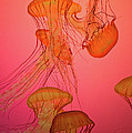 Enchanted Jellyfish 3 by Pam Fong