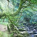 Enchanted Leprechaun Forest by Douglas Barnett