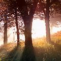 Enchanted Meadow by Debra and Dave Vanderlaan