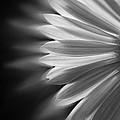 Enchanting by Ivelina G