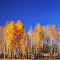 End Of Autumn by James Bethanis