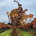End Of The Vineyard Row by Karen  W Meyer