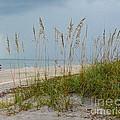 Englewood Beach by Carol  Bradley