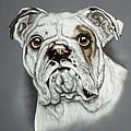 English Bulldog by Patricia Ivy