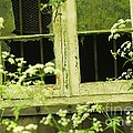 English Countryside Window by Rene Triay Photography
