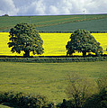 The Cotswolds 2 by Mike Nellums