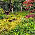 English Garden  by Adrian Evans