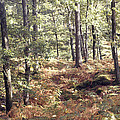 English Woods And Autumn Ferns by Daniel Blatt