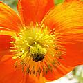Enter The Orange Poppy by Corinne Elizabeth Cowherd