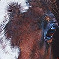 Equine 1 by Elena Kolotusha