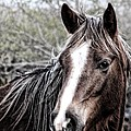 Equine Trance by Christy Leigh