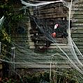 Escaping The Web by LeeAnn McLaneGoetz McLaneGoetzStudioLLCcom