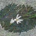 Estuary Bloom by Tim Allen