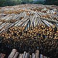 Eucalyptus Stacked Lumber by Mark Moffett