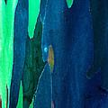 Eucalyptus Tree Trunk by Thomas R Fletcher
