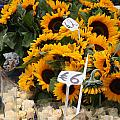 European Markets - Sunflowers And Roses by Carol Groenen