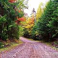 Even Cloudy Days Sing In The Adirondacks 10 by Peggy Miller
