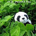 Even Pandas Are Irish On St. Patrick's Day by Ausra Huntington nee Paulauskaite