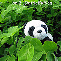 Even Pandas are Irish on St. Patrick