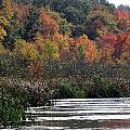 Even Swamps Have Beauty by Kim Galluzzo Wozniak
