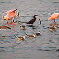 Evening Activity In The Bay by Roena King