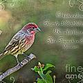 Evening Finch Greeting Card With Verse by Debbie Portwood