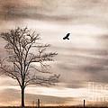 Evening Flight by Darren Fisher