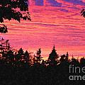 Evening In Paradise Painterly Style by Barbara Griffin