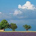Evening In Provence by Brian Jannsen