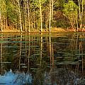 Evening Light On A Missouri Pond I by Greg Matchick