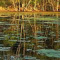 Evening Light On Missouri Pond 2 by Greg Matchick