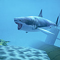 Example Of Reality Centre Graphics, Shark by David Parker