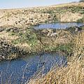 Exmoor Blanket Bog by David Aubrey