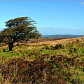Exmoor's Heather-covered Hills by Carla Parris