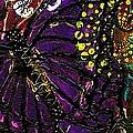 Exotic Butterflies II by Angela L Walker