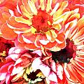 Explosion Of Bright Zinnias by Elaine Plesser