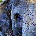 Eye Of The Elephant by David Lee Thompson